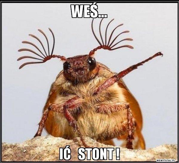 wes-ic-stont.jpg