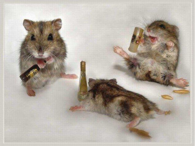 funny-hamsters-635x476.jpg